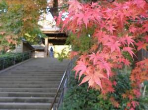 鎌倉の紅葉時期、2014年見頃!