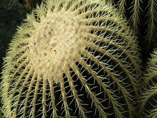 インテリアにも人気の多肉植物、サボテンとは?
