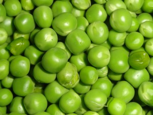 エンドウ豆の栽培方法・プランターでの育て方は?
